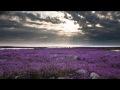 Download ✿⊱╮♥Kahit Konting Pagtingin - Ric Segreto✿⊱╮♥ MP3 song and Music Video