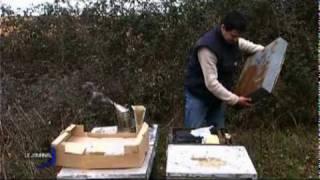 Protéus : Les apiculteurs inquiets (St Aubin-La-Plaine)