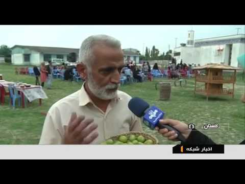 Iran Green Plums harvest, Nokandeh district برداشت گوجه سبز بخش نوكنده ايران