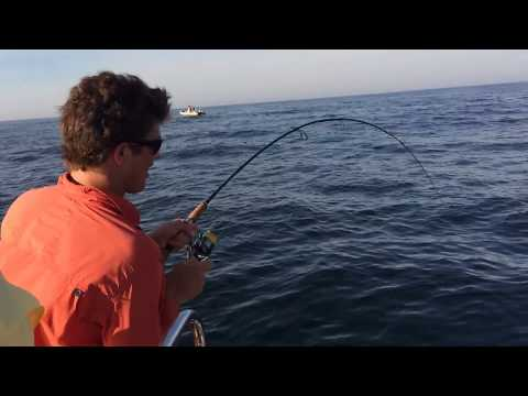 Yellowtail Fishing Cape Point