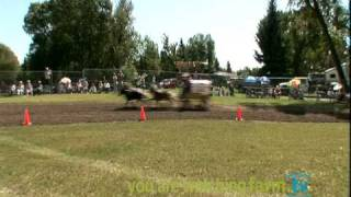 World Miniature Horse Chuck Wagon Championship Race 1 To 3