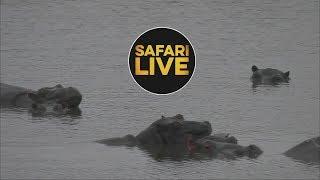safariLIVE - Sunrise Safari - July 9, 2018 thumbnail