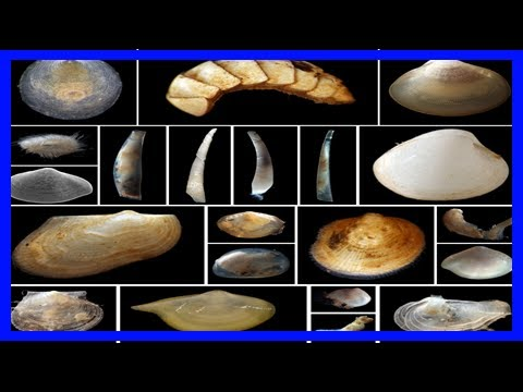Dna study in the pacific reveals 2000 percent increase in our knowledge of mollusc biodiversity