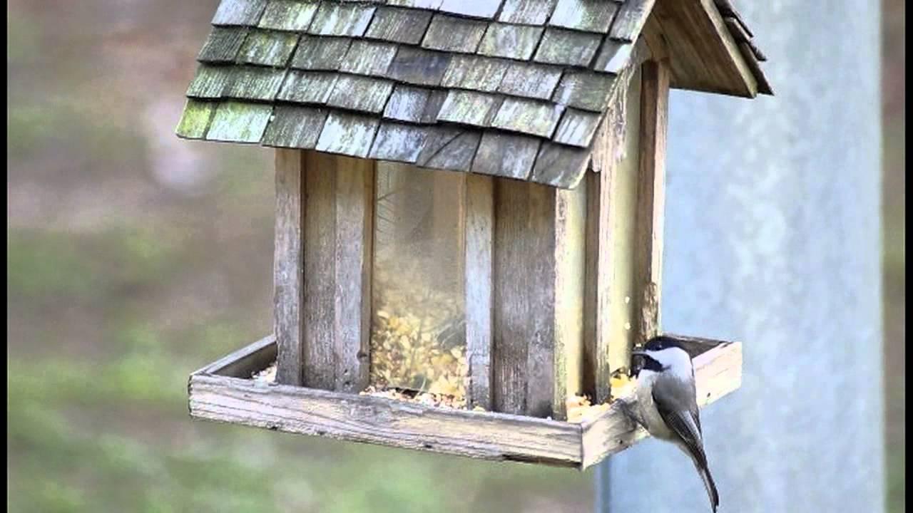 birdwatching various birds at our backyard bird feeder u0027s winter