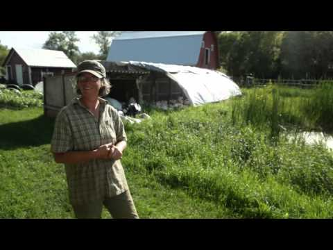 Interview with Organic Farmers   Project 40: Lake Winnipeg Research Consortium