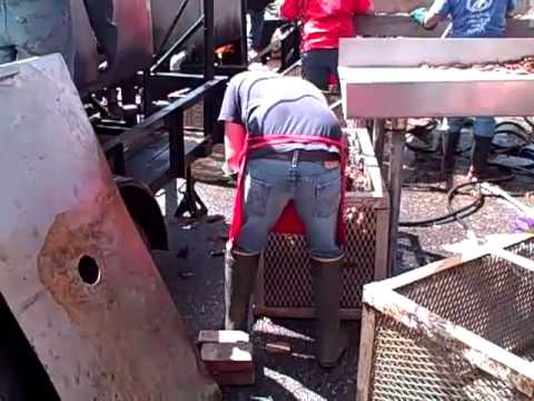 Crawfish Cooking - Rajun Cajun Festival - Memphis