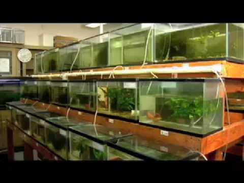 Urban Aquaculture Fish Farming In The City Youtube