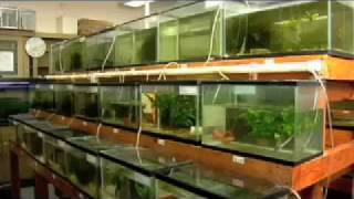 Urban Aquaculture: Fish Farming in the City