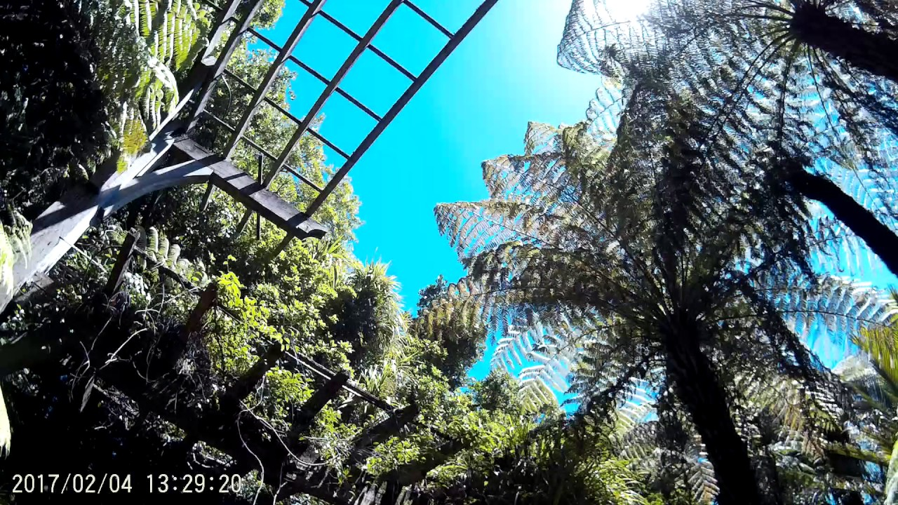 auckland domain winter garden fernery youtube