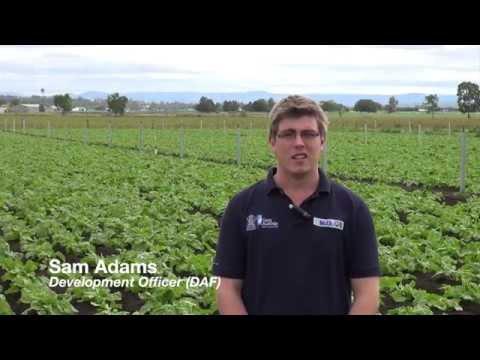 Fodder Beet Development trial -  May 2015 Update