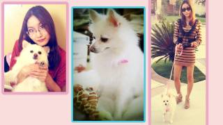 Vlog - Cece's Cute Dog -  Pomeranian Yoshi & My First Smartphone Droid Bionic