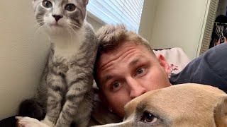 Sweetest Pitbull Cuddles | Kitten Grooms Himself & Owner