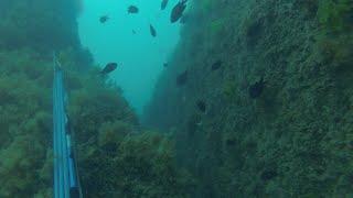 Подводная охота на выбор