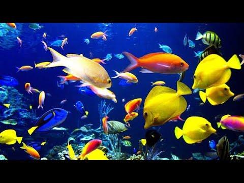 Plural Of Fish
