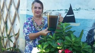 Fertilizante natural com pó de café (receita)