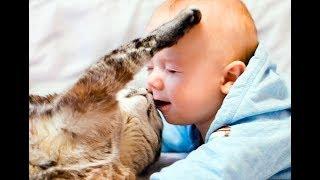 Лучшая подборка Кошки и Дети!Приколы с Д...