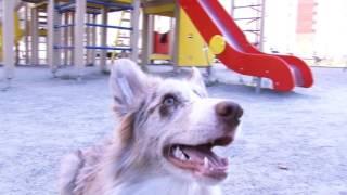 ЗООСАД: адаптация щенка в городской среде