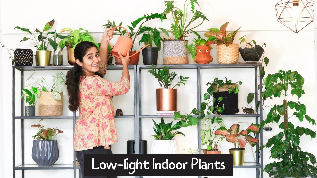 Best Low Light Indoor Plants for Any Home