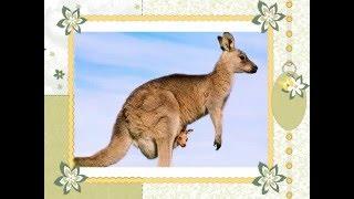 Фотоальбом: животный мир Австралии(Фотоальбом: животный мир Австралии., 2016-02-10T10:37:55.000Z)