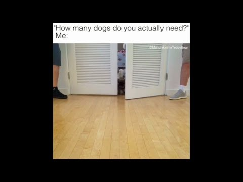 How many dogs do you actually need?