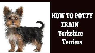 How To Potty Train Yorkie