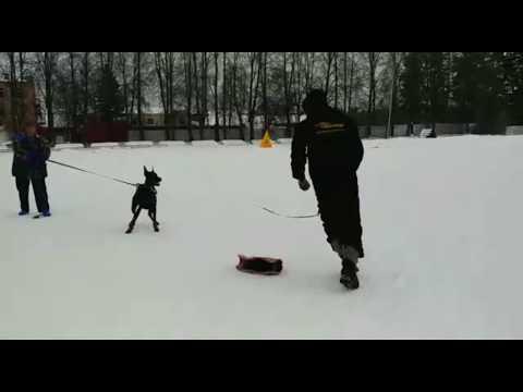 Тренировка по защите с Дмитрием Зайцевым, март 2018