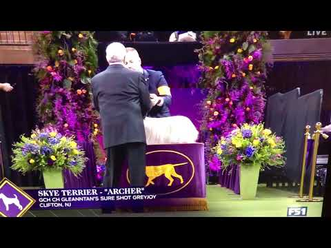 "Skye Terrier ""Archer"" at Westminster 2020"