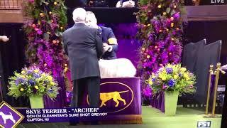 "Skye Terrier ""Archer"" at Westminster 2020"