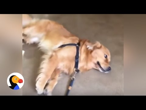 Thumbnail: Funny Dog Refuses to Leave Pet Store | The Dodo