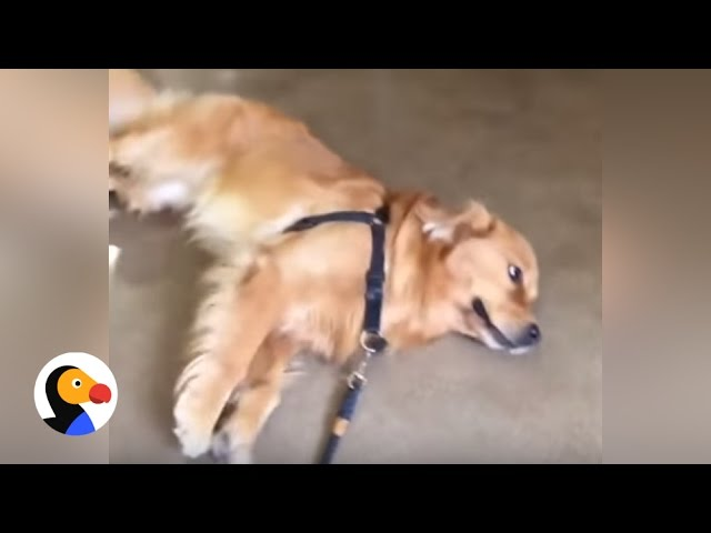 Funny Dog Refuses to Leave Pet Store | The Dodo