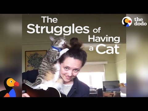 Every Cat Owner Knows These Struggles | The Dodo