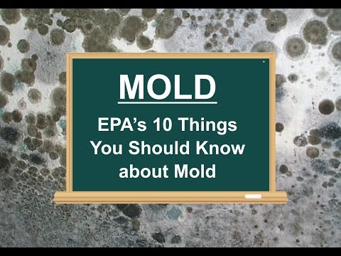Mold - EPA's 10 Things You Should Know about Mold