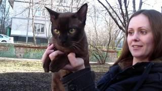 Питомник бурманских кошек PCA БУРМАКОФФ