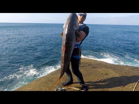 HUGE SAMSON FISH Landbased