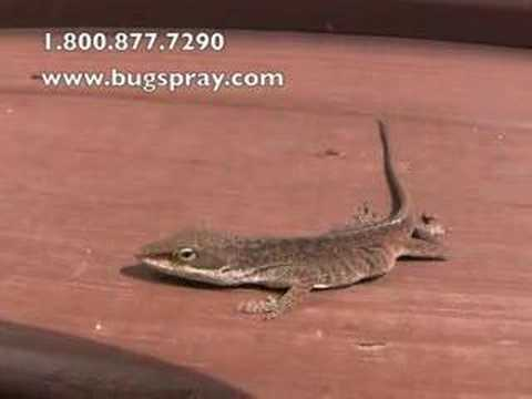lizard control and treatments for the home yard and garden