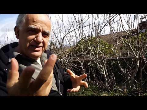 Bill Farhat the Fig Man of Seattle