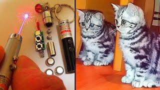 Laser Pointer Teardown (+ My Cats)