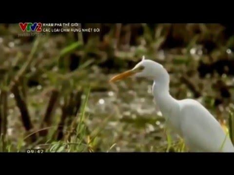 Các loài chim rừng nhiệt đới - Thiên nhiên hoang dã full HD Thuyết minh