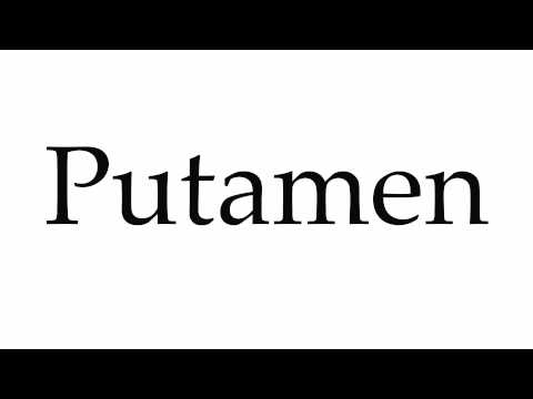 How to Pronounce Putamen