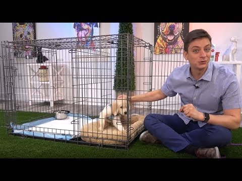 Zak George And The Potty Training Puppy Apartment How To Train A