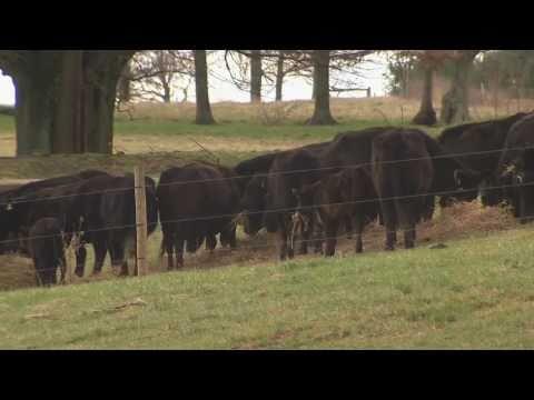 Virginia's Robert Mills Farm