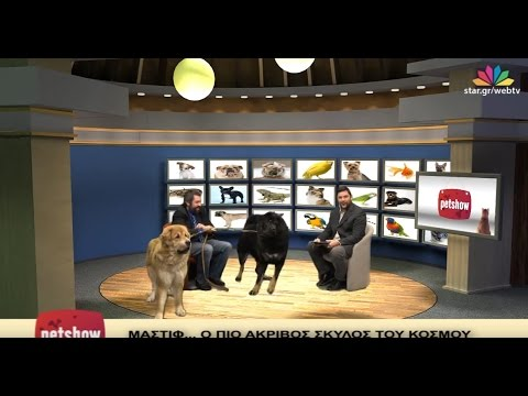 """Pet Show"" - 14.12.2016 -  Tibetan mastiff & Ιερακοτροφία (Harris's Hawk)"