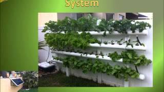 Diy Outdoor Hydroponic Grow For Beginners