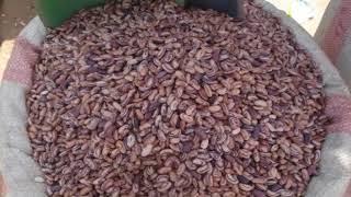 Nsima, culinary tradition of Malawi thumbnail