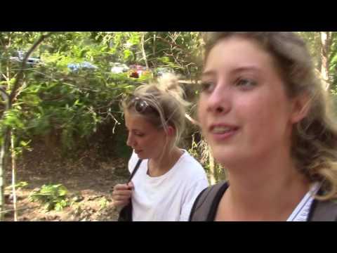 Großstadtdjungel BRISBANE: Koalas, Berge und Wolkenkratzer / Australien / Work&Travel #11