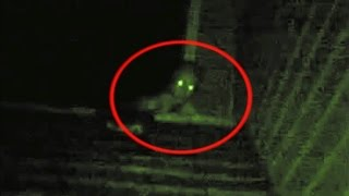 [Video]Top 5 Unexplained Creatures Caught On Camera