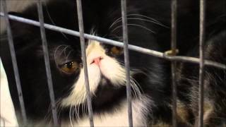 CFA SW Region Cat Show 2014