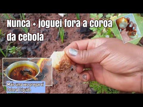 como-plantar-cebola-de-cabeça,-com-sucesso-aproveitando-a-coroa/-fazendo-novamente-coloral-líquido