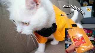 сделала ИЗ САЛФЕТКИ одежду для кошки