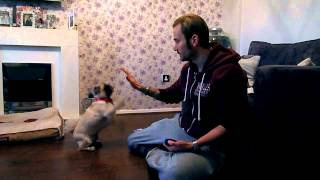 Teach Puppy To High Five